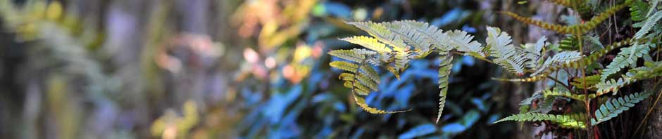 Website Banner Fern